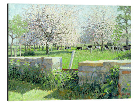 Aluminium print  Cows in the Orchard - Lucy Willis