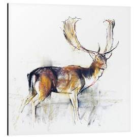 Aluminium print  Study of a Stag - Mark Adlington