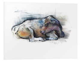 Foam board print  Lying cow - Mark Adlington