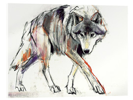 Acrylic print  Wolf in search - Mark Adlington