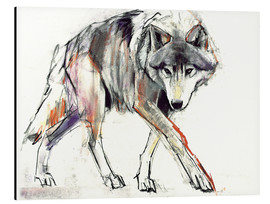 Aluminium print  Wolf in search - Mark Adlington