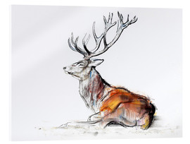 Acrylic print  Lying Stag - Mark Adlington