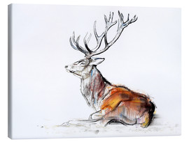 Canvas print  Lying Stag - Mark Adlington