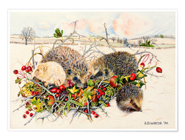 Poster  Hedgehogs in Hedgerow Basket - E.B. Watts