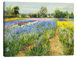 Canvas  Flower field - Timothy Easton