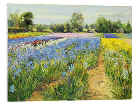 Foam board print  Flower field - Timothy Easton