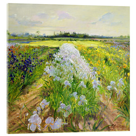 Acrylic glass  flower field - Timothy Easton