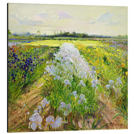 Alu-Dibond  flower field - Timothy Easton
