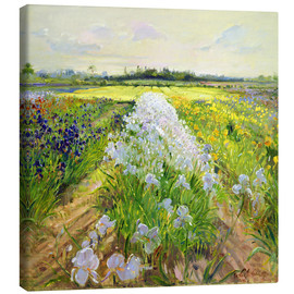 Canvas print  flower field - Timothy Easton