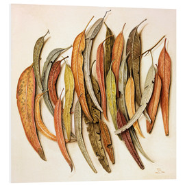 Foam board print  Eucalyptus Leaves, 2004 - Jenny Barron