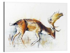Aluminium print  Elk searching food - Mark Adlington