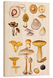 Wood print  Mushrooms and truffles - Elizabeth Rice