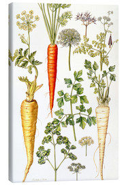 Canvas print  Carrot, Parsnip and Parsley - Elizabeth Rice