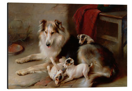 Aluminium print  A collie with terrier puppies, 1913 - Walter Hunt