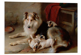 Foam board print  A collie with terrier puppies, 1913 - Walter Hunt