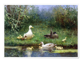 Poster  Ducks on a riverbank - David Adolph Constant Artz