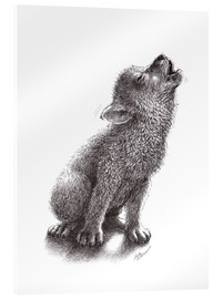 Acrylic print  Young Howling Wolf - Stefan Kahlhammer