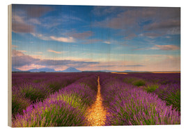 Wood print  Fields of Lavender, Provence - Circumnavigation