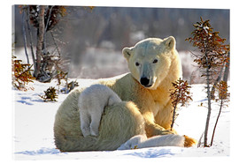 Acrylic print  Mother Polar Bear - Richard Wear