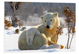 Foam board print  Mother Polar Bear - Richard Wear