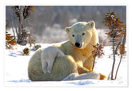 Premium poster Mother Polar Bear