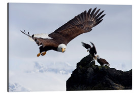 John Hyde - Bald Eagle in flight