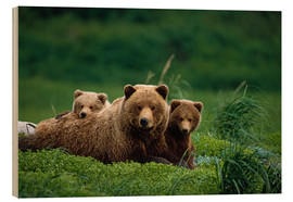 Wood print  Grizzly bear with cubs - Jo Overholt