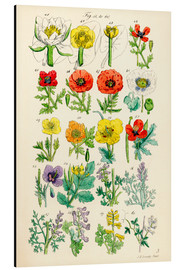 Aluminium print  Wildflowers - Sowerby Collection