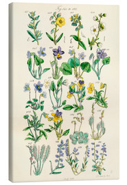 Canvas print  Wildflowers - Ken Welsh