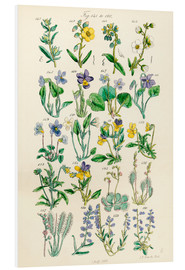 Foam board print  Wildflowers - Ken Welsh