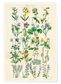 Premium poster  Wildflowers - Ken Welsh