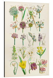 Alu-Dibond  Wildflowers, Sowerby 1281-1300 - Ken Welsh