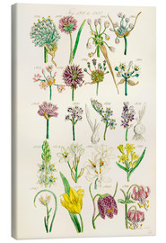 Canvas print  Wildflowers, Sowerby 1281-1300 - Ken Welsh