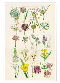 Poster  Wildflowers, Sowerby 1281-1300 - Ken Welsh