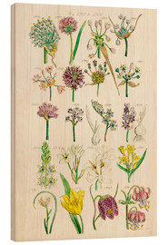 Wood print  Wildflowers - Sowerby Collection