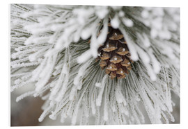 Foam board print  Pinecone in frost - Michael Interisano