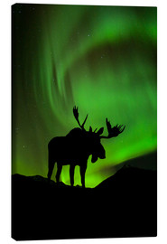 Canvas print  Moose silhouette with Aurora borealis - John Hyde
