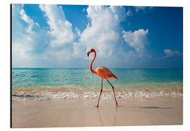 Alu-Dibond  Flamingo on the beach - Ian Cuming
