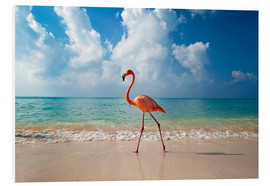 Foam board print  Flamingo on the beach - Ian Cuming