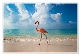 Premium poster  Flamingo on the beach - Ian Cuming