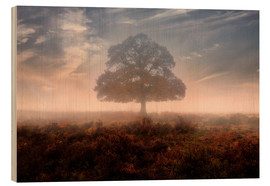 Wood  New Forest - Joana Kruse