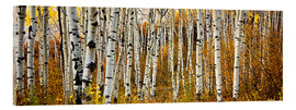 Acrylic glass  Aspens in autumn - Ron Dahlquist