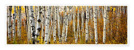 Premium poster  Aspens in autumn - Ron Dahlquist