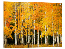 Forex  Autumn Forest at Buffalo Pass - Ron Dahlquist