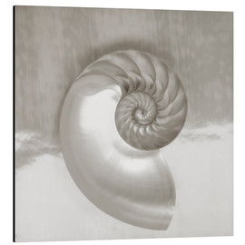 Aluminium print  Nautilus shell - Kate & Tom Turning & Gibson