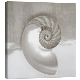 Canvas print  Nautilus shell - Kate & Tom Turning & Gibson