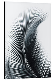 Aluminium print  Palm fronds - Larry Dale Gordon