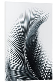 Forex  Palm fronds - Larry Dale Gordon