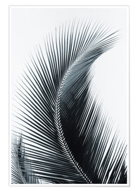 Premium poster  Palm fronds - Larry Dale Gordon