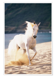 Premium poster White horse on the beach